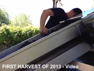2013 First Harvest